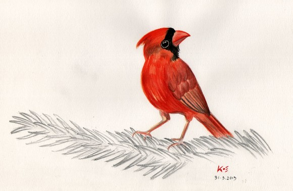 Red Cardinal (Watercolor Painting)