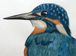 Kingfisher - Watercolor Painting